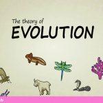 نظریه تکامل چیست؟