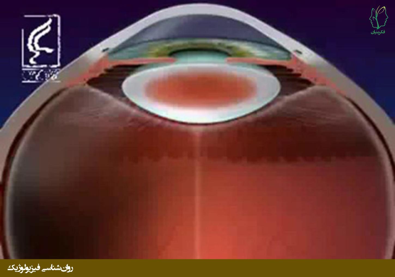 چگونگی پردازش اطلاعات بینایی