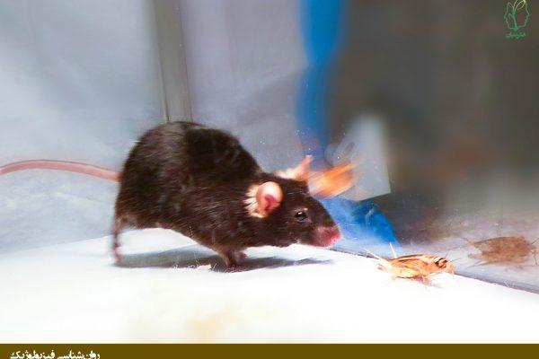 تخریب آمیگدال در موش و ترس بخش یک