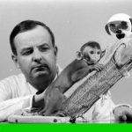 مطالعه هری هارلو روی دلبستگی میمونها