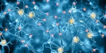 مطالعات اخیر محققان دانشگاه زوریخ نشان داد که آناتومی مغز هر انسان مانند اثر انگشت کاملا انحصاری است و این یگانگی نتیجه دو عامل ترکیب ژنها و تجربیات هر فرد در طول زندگی است.