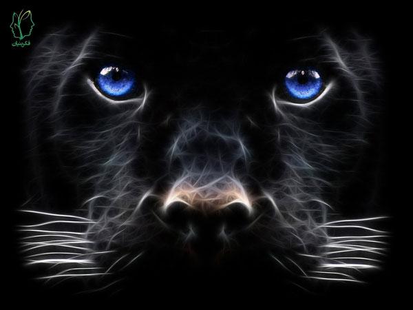 حیوانات در رؤیا و معانی آنها