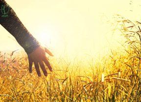 هفت راه برای دستیابی به نگرش بهتر