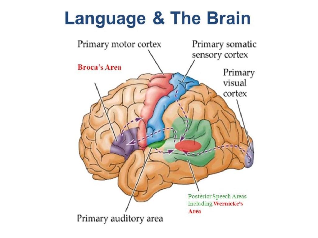 نظریه های یادگیری زبان