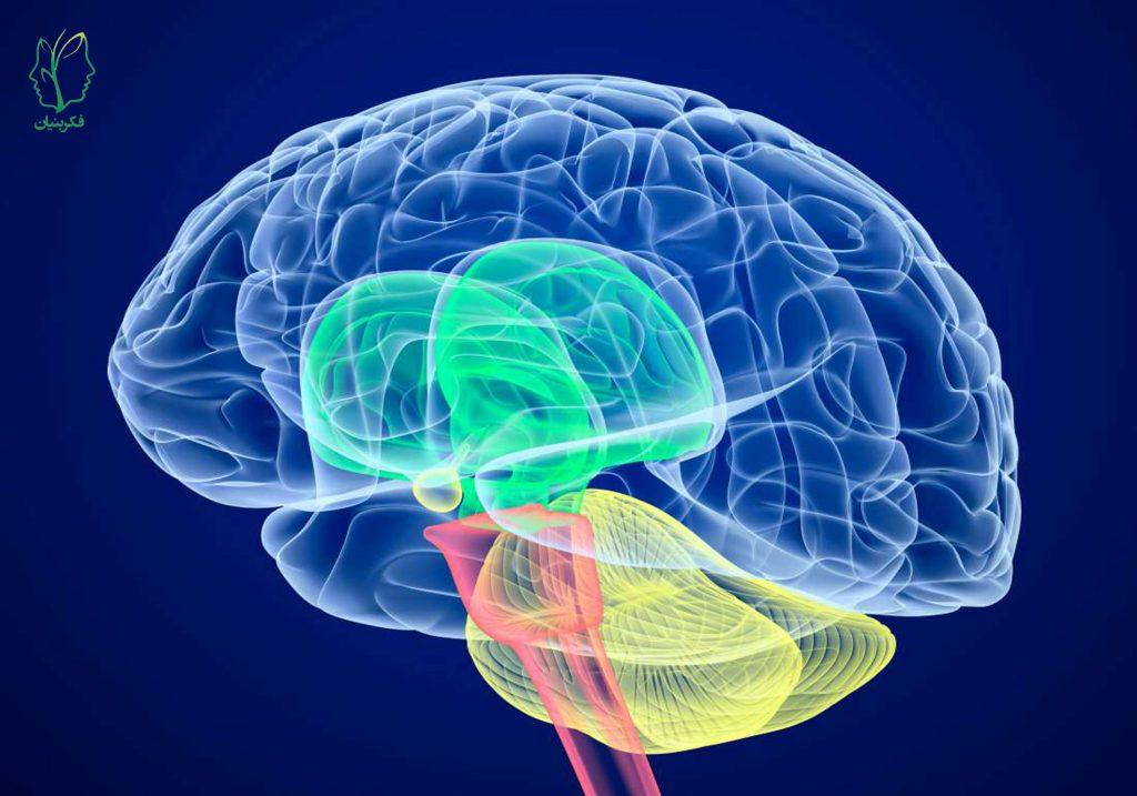 فلج مغزی (Cerebral Palsy) و روشهای درمانی آن چیست؟