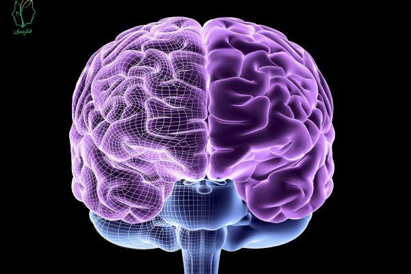 مغز انسان را بشناسید