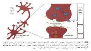 ناقلهای عصبی