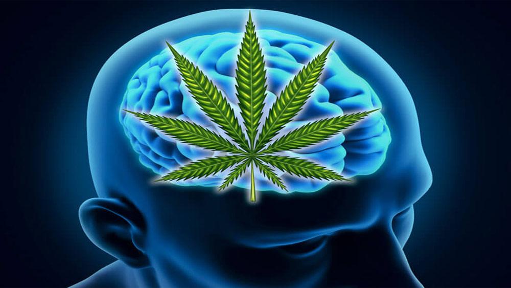 اثر شاهدانه بر مغز