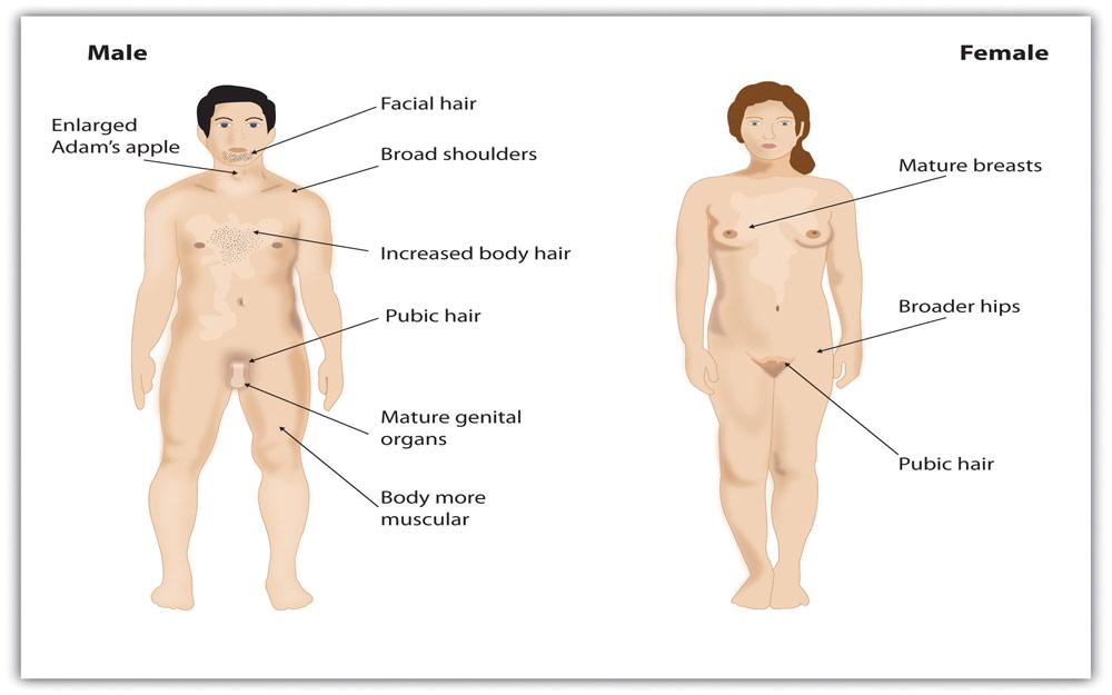 رشد بدنی